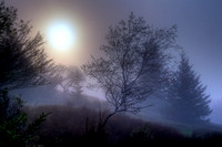 Sunrise thru Fog at Dolly Sods - Monongahela Nat'l Forest