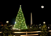 The National Christmas Tree - 2012
